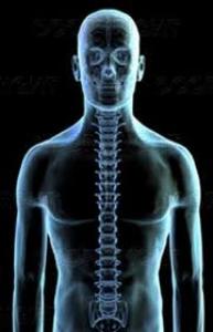 Bohner Chiropractic